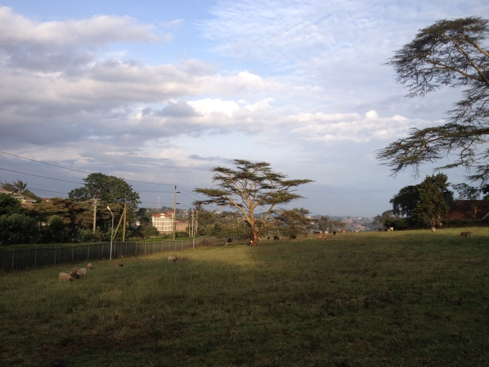 The view from ILRI, Nairobi hills wrapped in mist in the distance